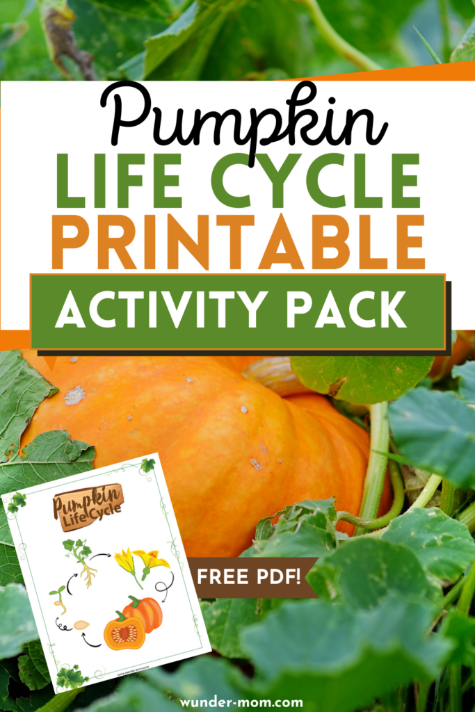 FREE pumpkin lifecycle printable activity pack