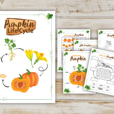 pumpkin life cycle printable activity pack