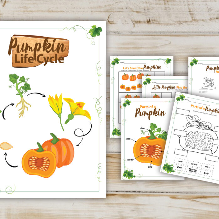 Pumpkin Life Cycle Printable Activity Pack