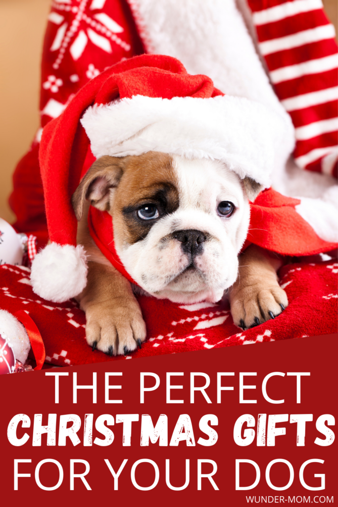 BEST GIFT IDEAS FOR DOGS
